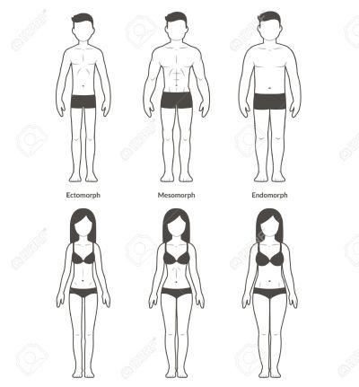 56736386-male-and-female-body-types-ectomorph-mesomorph-and-endomorph-skinny-muscular-and-fat-bodytypes-fitne.jpg